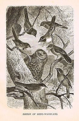 Wood's ANIMATED CREATION - Litho  -1885-  SONG-WARBLERS
