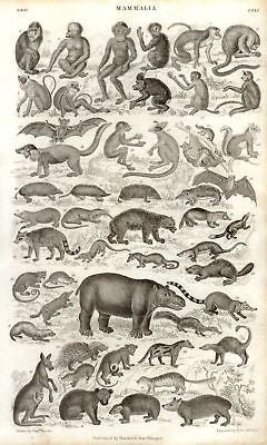 ANTIQUE ANIMAL PRINT