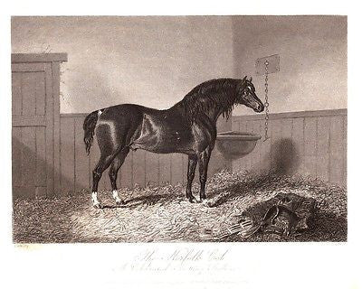 The Sporting Magazine's - THE NORFOLK COB by Hacker - Steel Engraving - 1868
