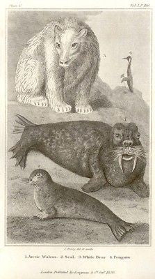 Bingley's Animals - 1820 - WALRUS, SEAL, BEAR & PENGUIN