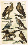 ANTIQUE BIRD PRINTS