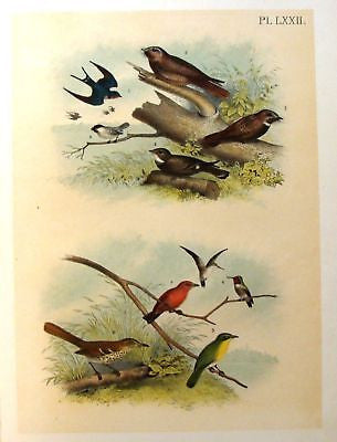 Sandtique Antique Bird Prints