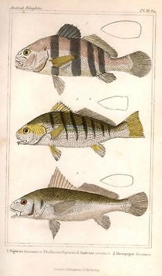 ANTIQUE FISH PRINT
