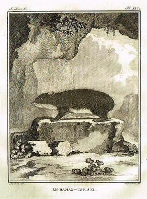"De Seve's Animals - ""LE DAMAN - ISRAEL""- Copper Engraving - 1760"