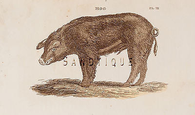 "Brightly's World View - ""HOG"" - 1807 - Copper Engraving"