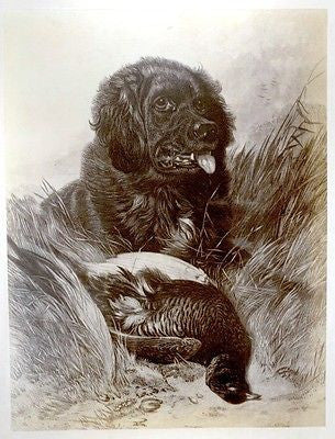 "Antique Albumen  Print -c1870- ""SETTER & GROUSE"" by Ausdell"