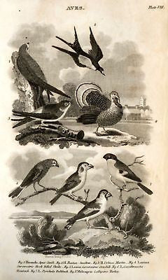 """Animated Nature"" by Goldsmith -1838- BIRDS - TURKEY - Sandtique-Rare-Prints and Maps"