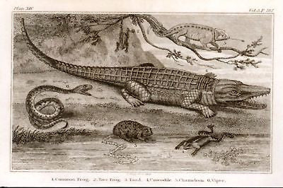 ANTIQUE REPTILE PRINT
