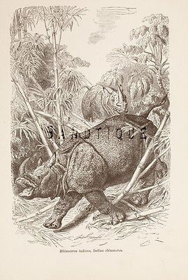 "Wood's ""ANIMATED CREATION"" - Litho -1885- INDIAN RHINOCEROUS"