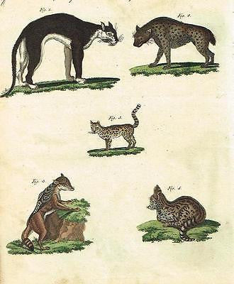 "Bertuch's ""Bilderbuch"" Hand-Colored Engraving. -1798- KINDS OF CATS"