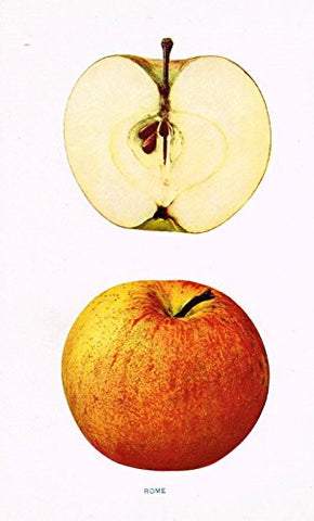 "Beach's Apples of New York - ""ROME"" - Lithograph - 1905"