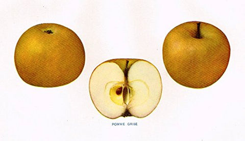 "Beach's Apples of New York - ""POMME GRISE"" - Lithograph - 1905"