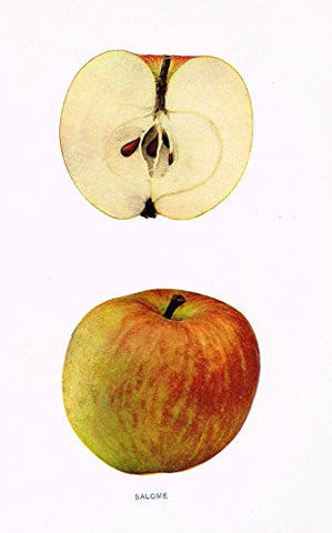 "Beach's Apples of New York - ""SALOME"" - Lithograph - 1905"
