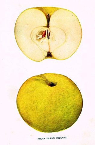 "Beach's Apples of New York - ""RHODE ISLAND GREENING"" - Lithograph - 1905"