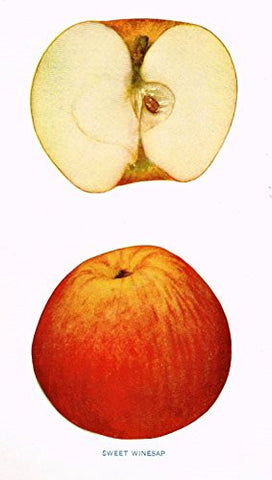 "Beach's Apples of New York - ""SWEET WINESAP"" - Lithograph - 1905"
