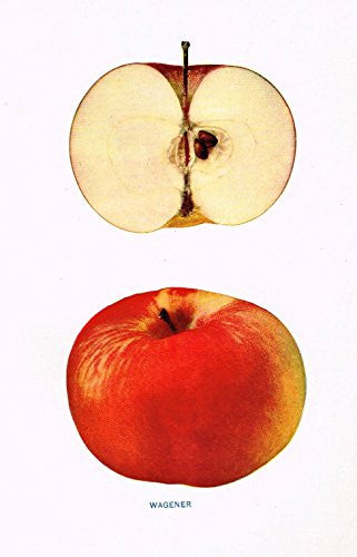 "Beach's Apples of New York - ""WAGENER"" - Lithograph - 1905"