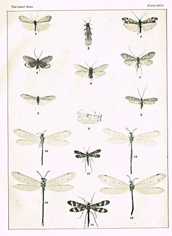 Howard's The Insect Book - NEUROPTEROID INSECTS - PLATE XXIV - Lithograph - 1902