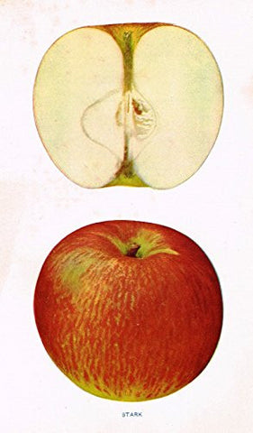 "Beach's Apples of New York - ""STARK"" - Lithograph - 1905"