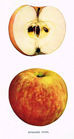 "Beach's Apples of New York - ""STREAKED PIPPIN"" - Lithograph - 1905"