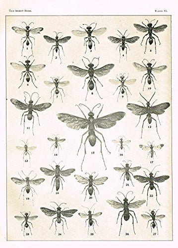 "Howard's The Insect Book - ""WASPS - PLATE XI"" - Lithograph - 1902"