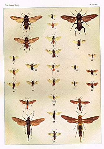 Howard's The Insect Book - SAW FLIES AND HORN TAILS - Lithograph - 1902