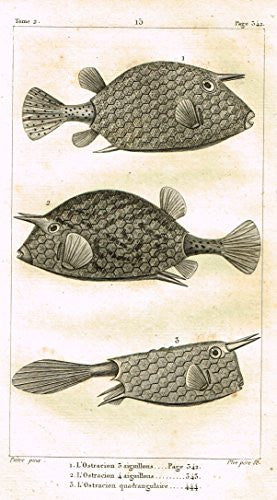 De Lacepede's L'Histoire Naturelle - L'OSTRACION (3 VARIETIES) - Copper Engraving - 1825