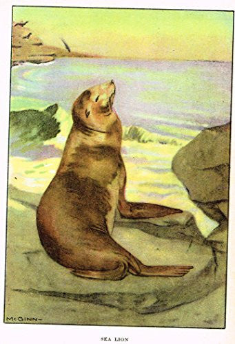 "Seton's Northern Animals - ""SEA LION"" - Lithograph - 1909"