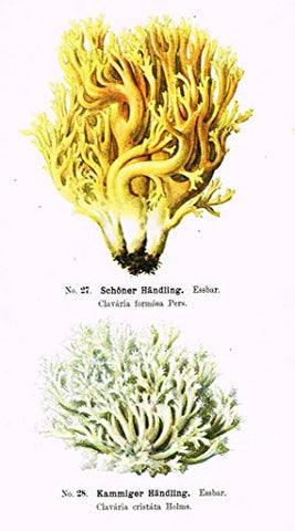 Schmalfub's Mushrooms - SCHONER HANDLING - Coloured Lithograph - 1897