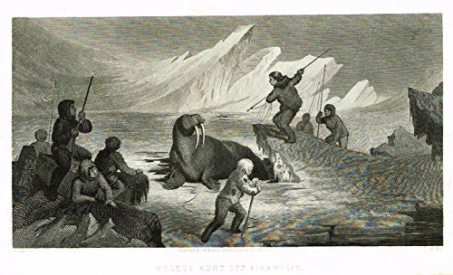 "Kane's Arctic Explorations - ""WALRUS HUNT OFF PIKANTLIK"" - Steel Engraving - 1856"
