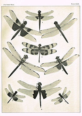 Howard's The Insect Book - DRAGON FLIES- PLATE XLIII - Lithograph - 1902