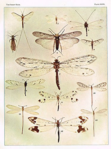 Howard's The Insect Book - NEUROPTEROID INSECTS - Lithograph - 1902
