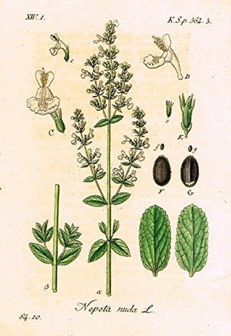 "Strum's Flowers - ""NEPETA NUDA"" - Miniature Hand-Colored Engraving - 1841"