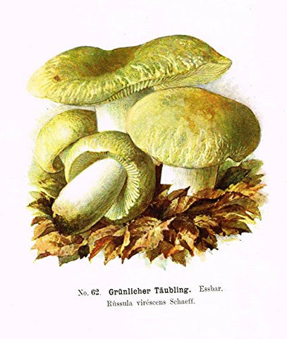 Schmalfub's Mushrooms - BRAND TAUBLING' - Coloured Lithograph - 1897