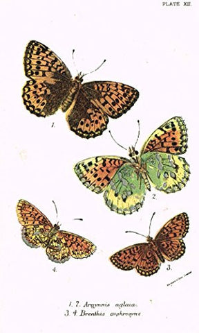 "Kirby's Butterfies & Moths - ""ARGYNNIS - Plate XII"" - Chromolithogrpah - 1896"
