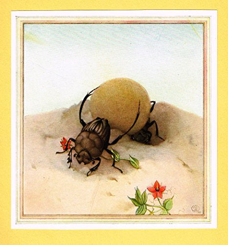 "Detmold's Fabre's Book of Insects - ""The Sisyphus"" - Lithograph - 1921"