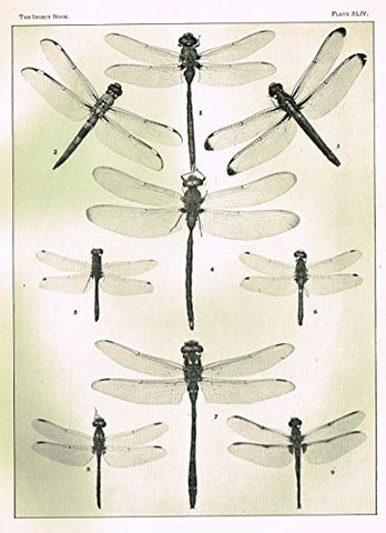 Howard's The Insect Book - DRAGON FLIES- PLATE XLIV - Lithograph - 1902
