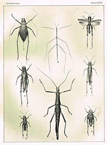 Howard's The Insect Book - TRUE LOCUSTS - PLATE XXXIV - Lithograph - 1902
