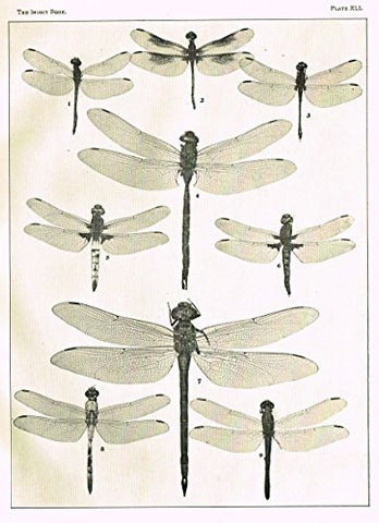 Howard's The Insect Book - DRAGON FLIES- PLATE XLI - Lithograph - 1902