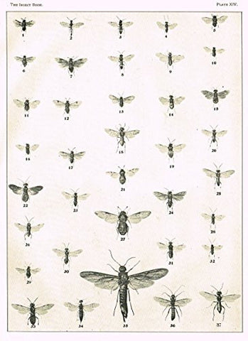 Howard's The Insect Book - SAW FLIES - PLATE XIV - Lithograph - 1902
