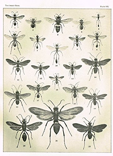 "Howard's The Insect Book - ""WASPS - PLATE VII"" - Lithograph - 1902"