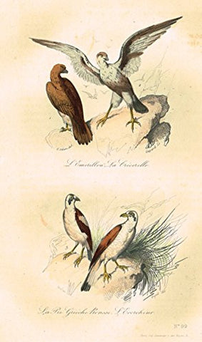 "Buffon's Book of Birds - ""LA PIE GUICHE ROUSSE"" - Hand-Colored Engraving - 1841"