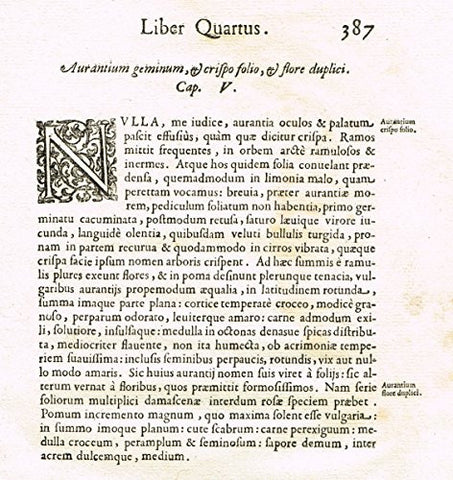 "Ferrari HESPERTHUSA'S - ""ILLUMINATED INITIAL - N, Page 387"" - Copper Engraving - 1646"