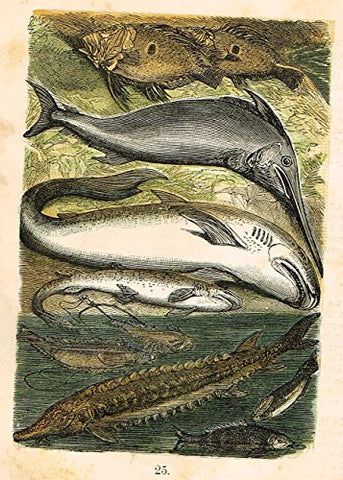 "Buffon's Fish - ""SWORDFISH, SHARK, DOGFISH, STRUGEON, ETC."" - Chromolithograph - 1869"