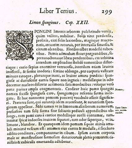 "Ferrari HESPERTHUSA'S - ""ILLUMINATED INITIAL - S, Page 299"" - Copper Engraving - 1646"
