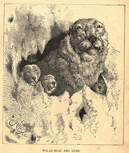 Roe's Illustrated Book of Animals - POLAR BEAR AND CUBS - Woodcut - 1892