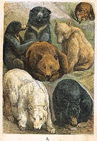 "Buffon's Fish - ""SLOTH, BEAR, POLAR, SYRIAN & BLACK BEARS ETC."" - Chromolithograph - 1869"