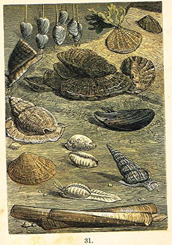 "Buffon's Fish - ""BARNACLES, LIMPET, PERIWINKLE, OYSTERS ETC."" - Chromolithograph - 1869"