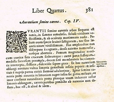 "Ferrari HESPERTHUSA'S - ""ILLUMINATED INITIAL - A, Page 381"" - Copper Engraving - 1646"