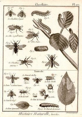 Antique Insect Print