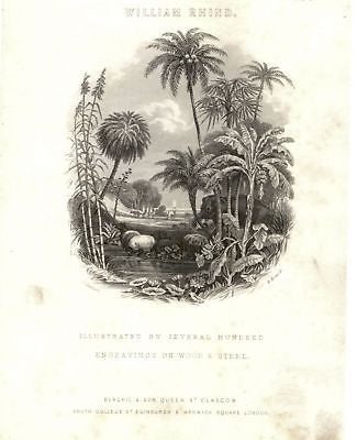 """TIMBER TREES"" by W. Rhind - 1855 - VEGETABLE KINGDOM"